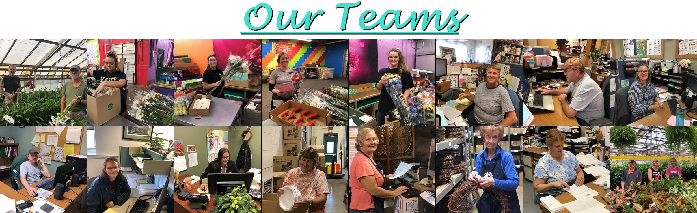 Our Teams