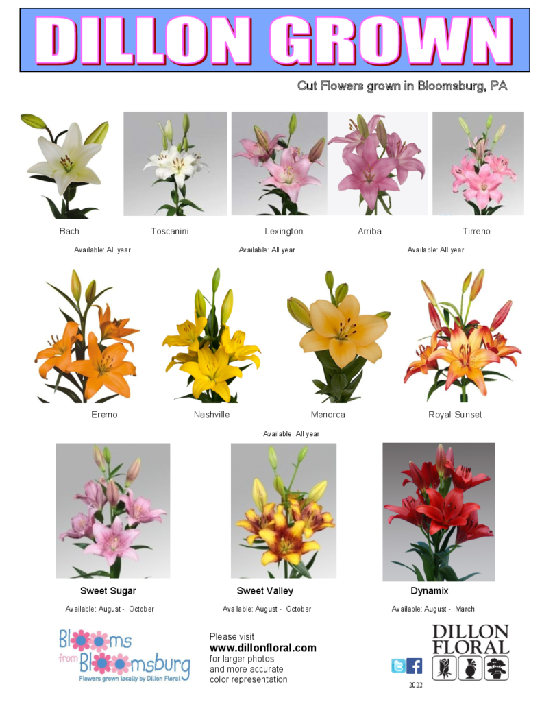 Lily Varieties